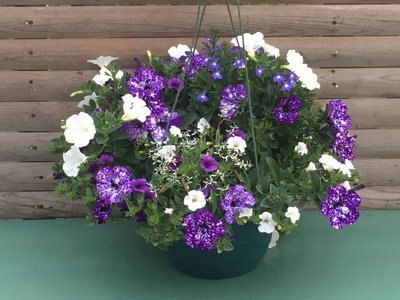 Night Sky Combo Hanging Basket (c9)